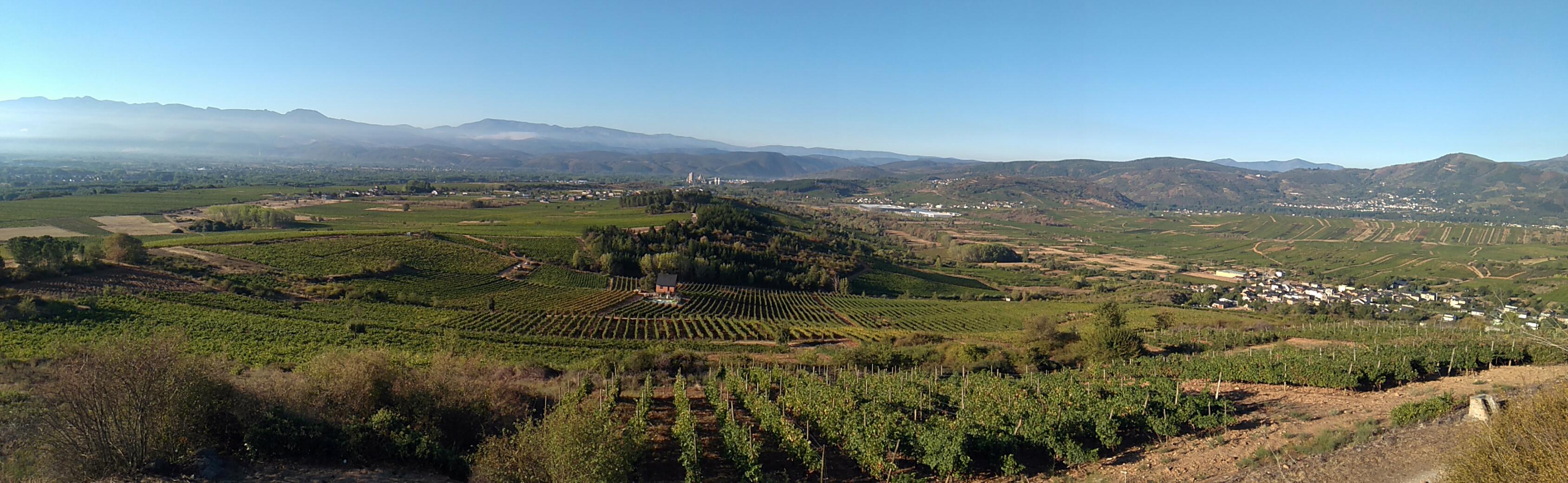 tierra prometida vino